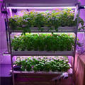 Hydroponic Indoor Vertical Farming Harvest In Sweden!